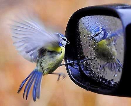 bird reflection_Positiveth
